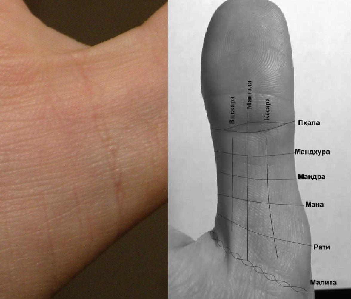 предыдущих поколениях фото большого пальца на руке пшеничная линия приличия прописывают дарить