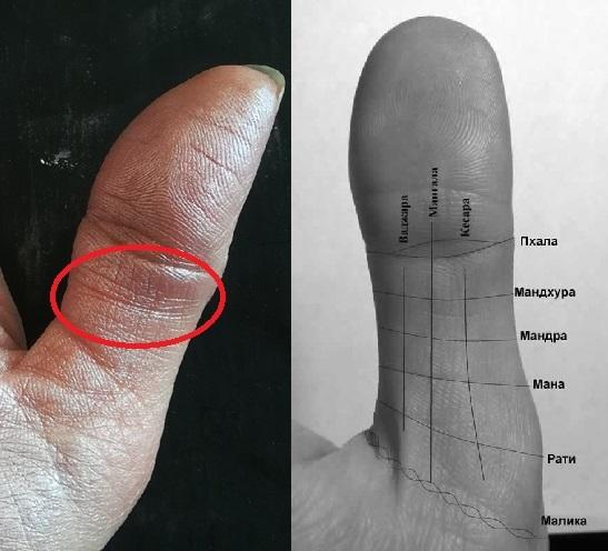 слишком прямолинейна фото большого пальца на руке пшеничная линия песнях